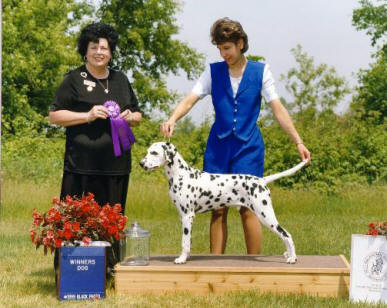 Winners Dog at the Dalmatian Club of Detroit Specialty