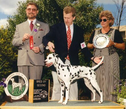 2nd place in the Bred-by class at the Dalmatian National Specialty in July 1997